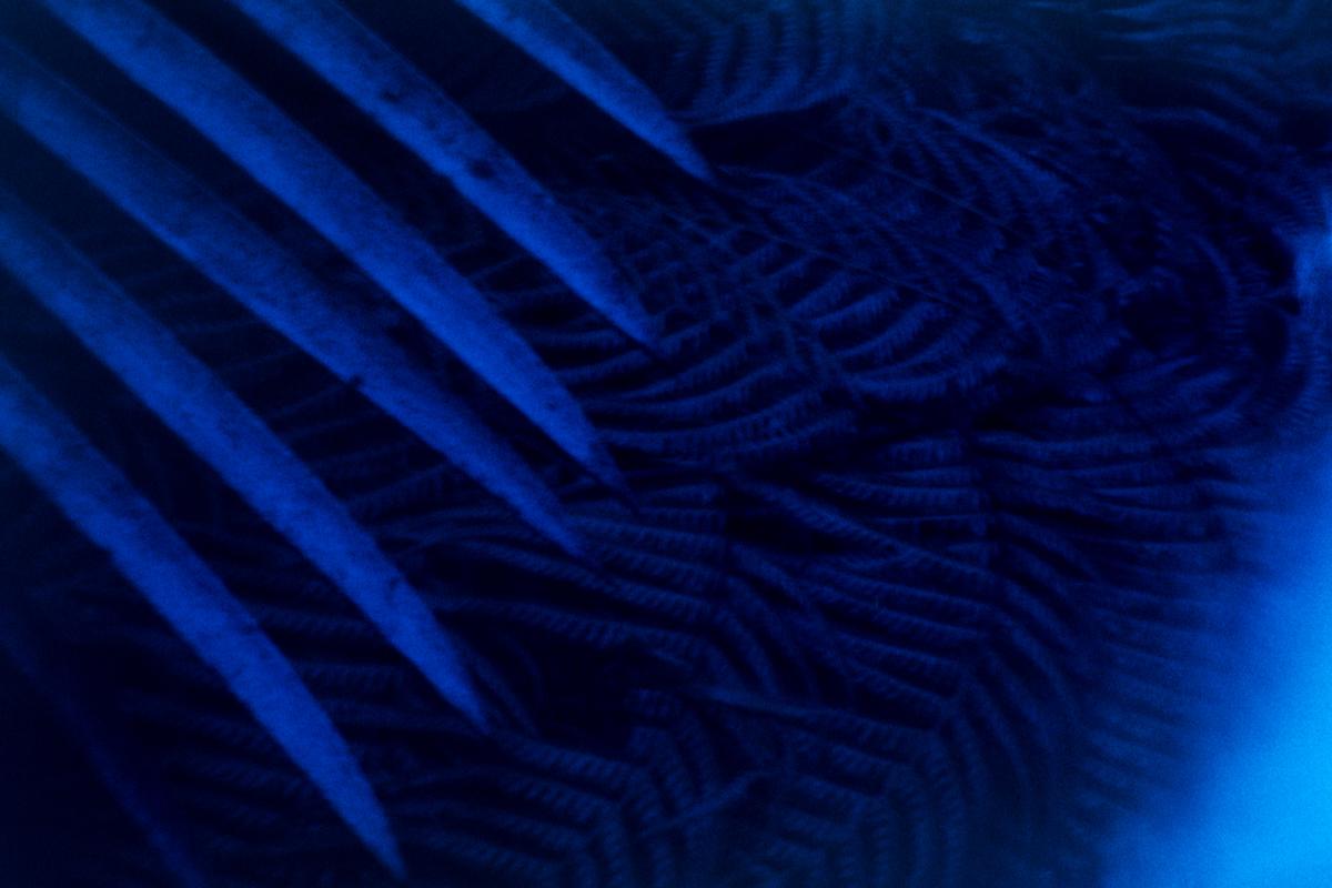 Blue ferns. Film burnt by light. Fougères bleues. Film brûlé par la lumière.