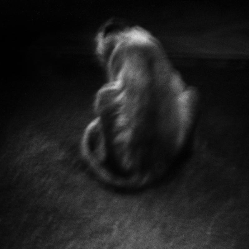 Mangabey with a collar. Vulnerable. This small African monkey has seen its distribution drastically reduced due to hunting and also the destruction of its natural habitat. In Equatorial Guinea, intensive logging has led to a dramatic decline in its population. Mangabey à collier. Vulnérable. Ce petit singe d'Afrique a vu son air de répartition se réduire de manière drastique en raison de la chasse et aussi de la destruction de son habitat naturel. En Guinée Equatoriale, l'exploitation forestière intensive est à l'origine d'une baisse dramatique de sa population.