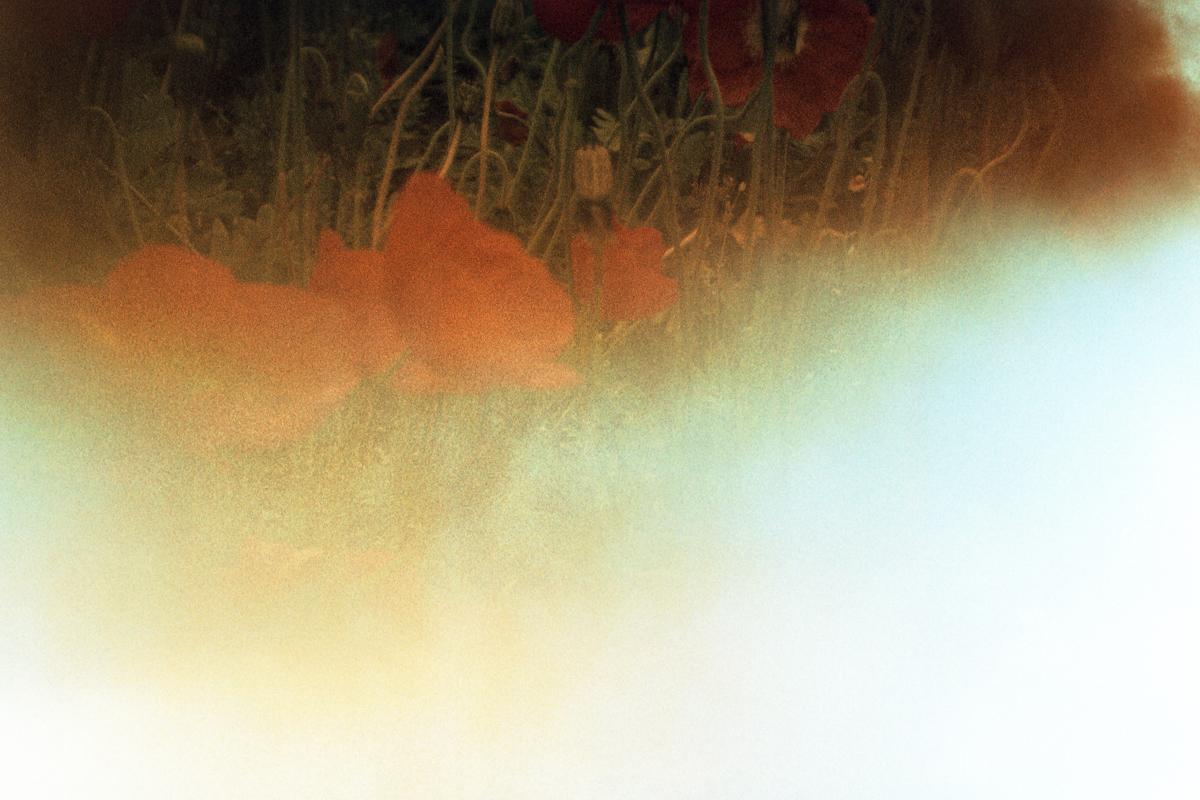 Poppy flowers. The film was burned by the sunlight. Fleurs de pavot. Le film a été brûlé par la lumière du soleil.