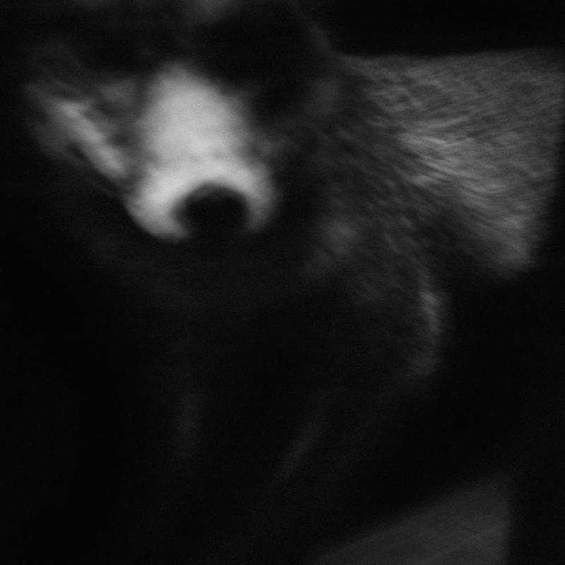 The fox's snout. Hunting maze. The fox is subject to mass destruction all year round. Le museau du renard. Mussée de la chasse. Le renard fait l'objet de destruction massive toute l'année.