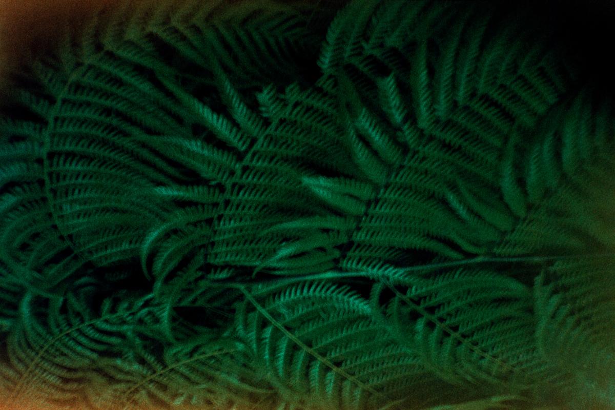 Ferns. The sun burned out the film. Fougères. Le soleil a brûlé le film.