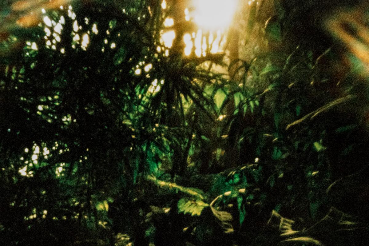 Greenhouse rainforest. Forêt tropicale sous serre. Jardin des plantes.