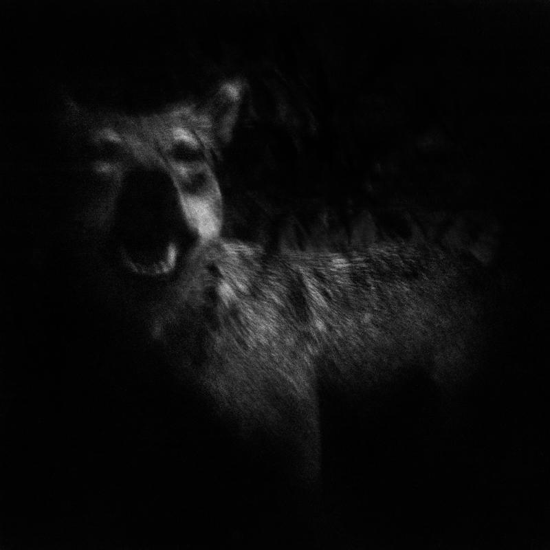Wolf. Hunting Museum. Considered a nuisance, intensively hunted, it disappeared in France in 1937. Since the beginning of the 1990s and the status of protected animal, it has reappeared.  Loup. Musée de la chasse. Considéré comme nuisible, chassé de façon intensive, il disparu en France en 1937. Depuis le début des années 90 et le statut d'animal protégé, il est réapparu.